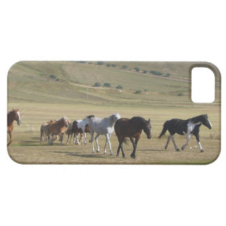 Herde der Pferde iPhone 5 Schutzhüllen