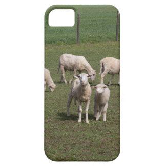 Herde der Schafe iPhone 5 Etui