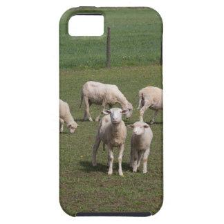 Herde der Schafe iPhone 5 Hüllen
