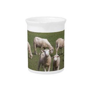 Herde der Schafe Krug