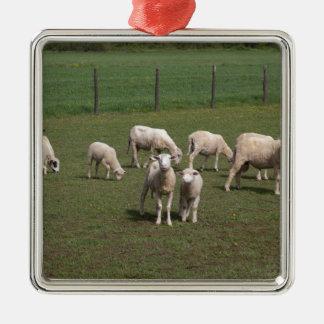 Herde der Schafe Quadratisches Silberfarbenes Ornament