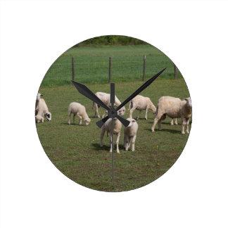 Herde der Schafe Runde Wanduhr