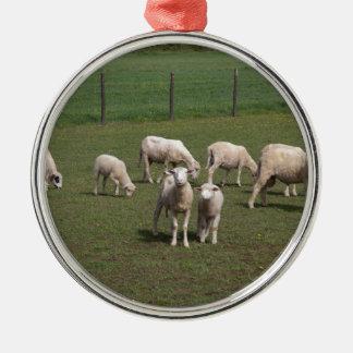 Herde der Schafe Rundes Silberfarbenes Ornament