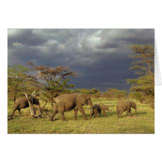 Herde des afrikanischen Elefanten, Loxodonta Karte