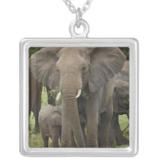 Herde des afrikanischen Elefanten, Loxodonta Versilberte Kette