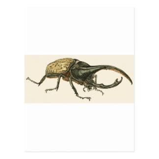 Herkules-Käfer Postkarte