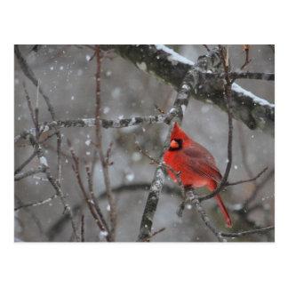 Herr Cardinal - Postkarte