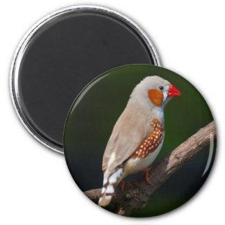 Herr Finch Magnet Runder Magnet 5,7 Cm