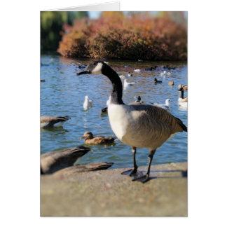 Herr Goose Karte