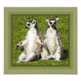 Herr u. Frau Lemur Fotodruck