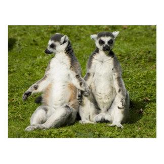Herr u. Frau Lemur Postkarte