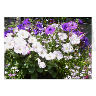 Herrliche lila und weiße Petunien Karte