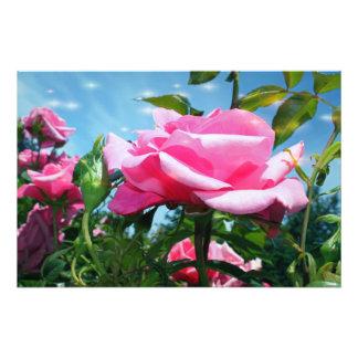 Herrliche rosa Rose im blauen Himmel. Fotodruck