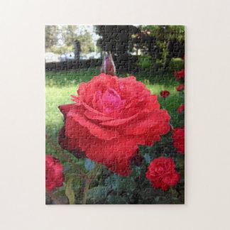 Herrliche Rote Rosen Puzzle