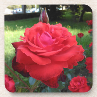 Herrliche Rote Rosen Untersetzer
