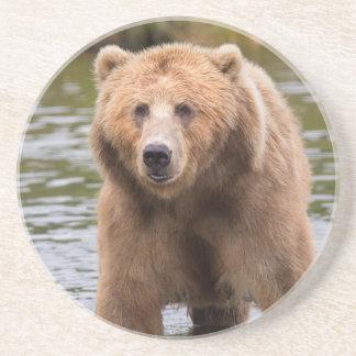 Herrlicher Kodiak-Braunbär Getränkeuntersetzer