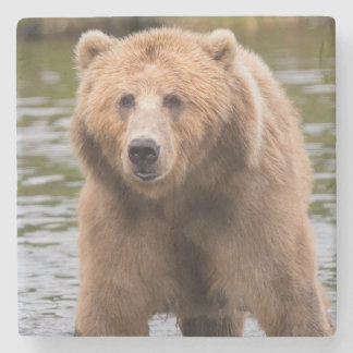 Herrlicher Kodiak-Braunbär Steinuntersetzer
