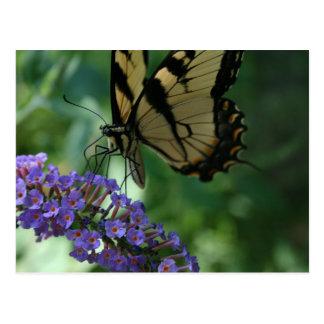 Herrlicher Tiger-Frack-Schmetterling Postkarte