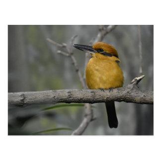 Herrlicher Vogel Postkarte