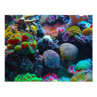 Herrliches Korallenriff Postkarte