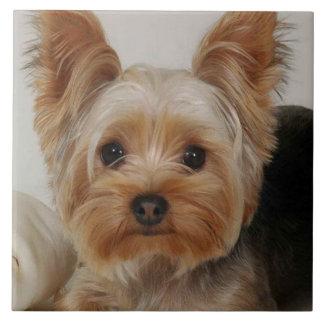 Herrliches Yorkshire Terrier Keramikfliese
