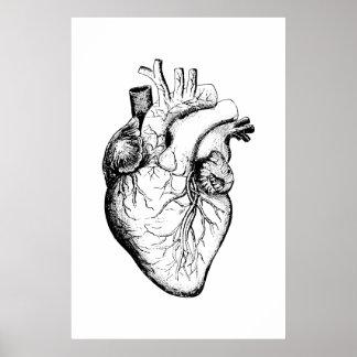 Herz-Anatomie-Illustrations-Plakat Poster