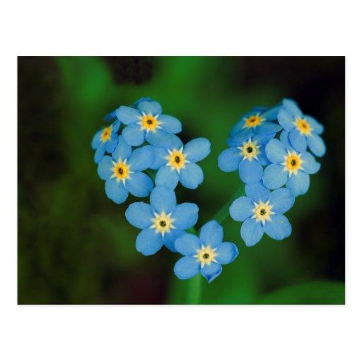 Herz-geformte Vergissmeinnicht-Blumen Postkarte