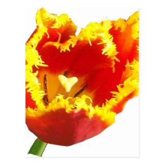 Herz tulip.png postkarte