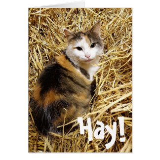 lustige katzen geschenke