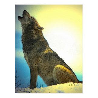 Heulenwolf am Sonnenuntergang Postkarte