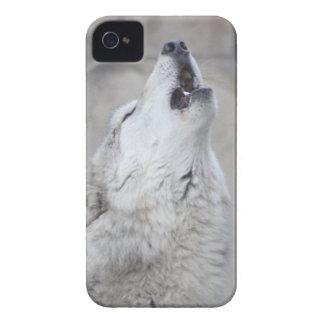 Heulenwolf Case-Mate iPhone 4 Hülle