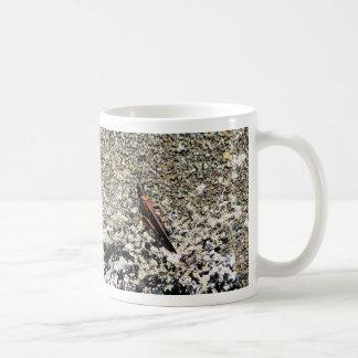 Heuschrecke, Isla Bartolome, Galapagos Kaffeetasse
