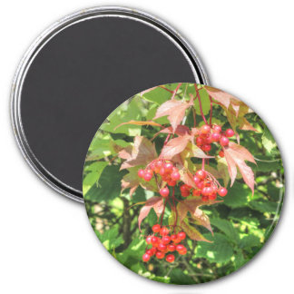 Highbush Moosbeeren Runder Magnet 7,6 Cm