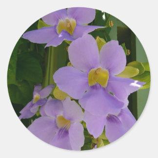 Himmel-Blumen-Rebe-tropische lila Blumen Runder Aufkleber