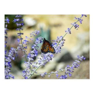 Hinterhof-Schönheiten (Spinnen auch in der Postkarte