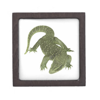 Hinterlistiger Galapagos-Leguan Kiste