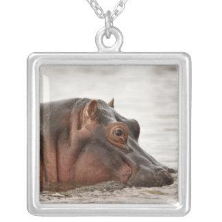 Hippopotamus, Hippopotamus amphibius, See Versilberte Kette