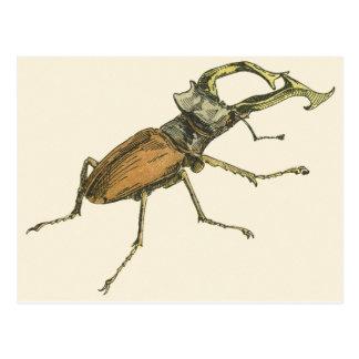 Hirsch-Käfer Postkarte