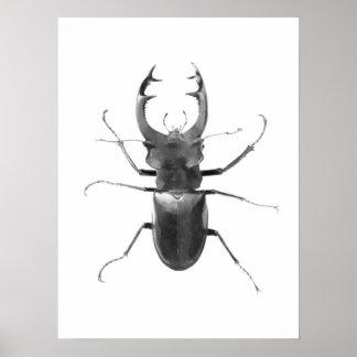 Hirsch-Käfer-schwarzes u. weißes Plakat