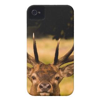 Hirsch von Richmond-Park iPhone 4 Case-Mate Hülle