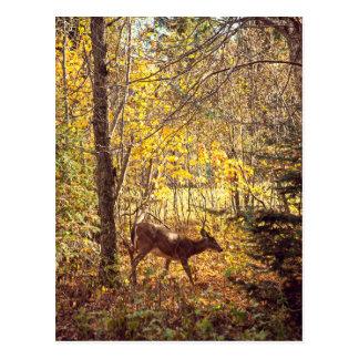 Hirschkuh - Nationalpark des Berges-zitternd Postkarte