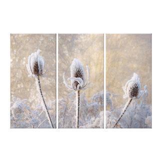 Hoarfrost auf Karde-Winter-Foto-landschaftlicher Leinwanddruck