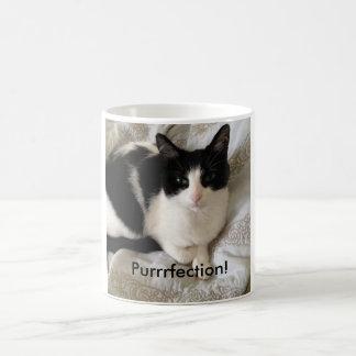 Hoch entwickelte Kaffee-trinkende Katze: Kaffeetasse