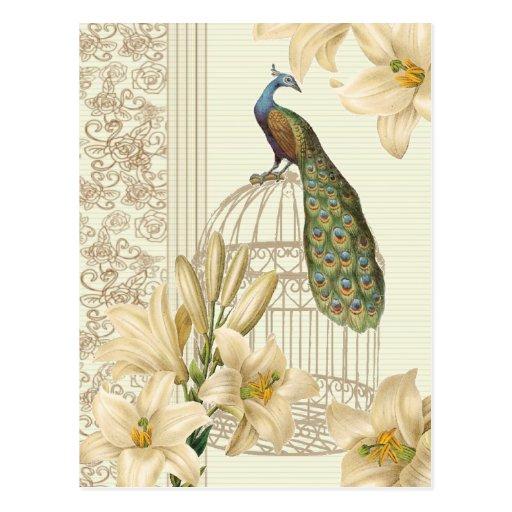 Hoch entwickelter Vintager Pfau u. Käfig-Lilie Postkarten