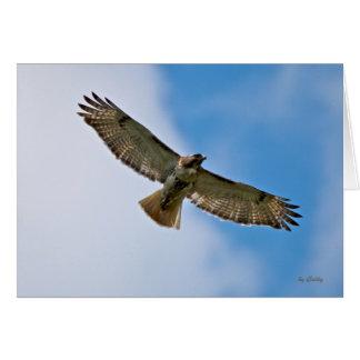 Hochfliegende Falke-Anmerkungs-Karte Karte