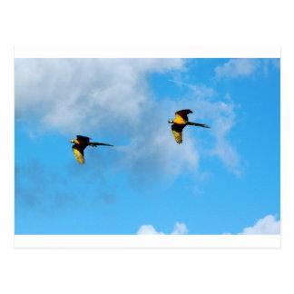 Hochfliegender Cockatoo Postkarte