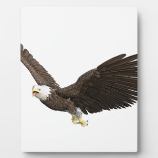 Hochfliegender Weißkopfseeadler Fotoplatte