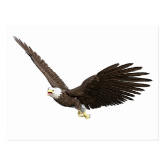 Hochfliegender Weißkopfseeadler Postkarte