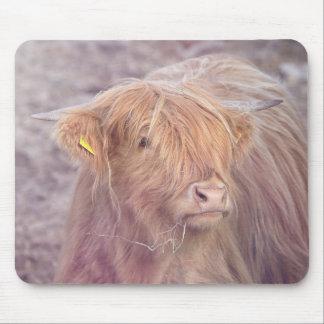 Hochland-Kuh, Hochland-Vieh Mauspads