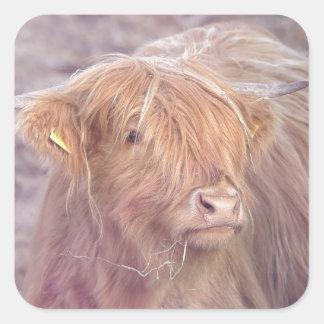 Hochland-Kuh, Hochland-Vieh Quadratischer Aufkleber